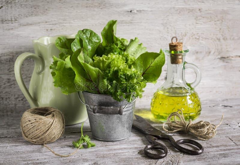 Ny örtagård i en metallhink, olivolja i glasflaska, gammal tappningsax och en tillbringare royaltyfria bilder