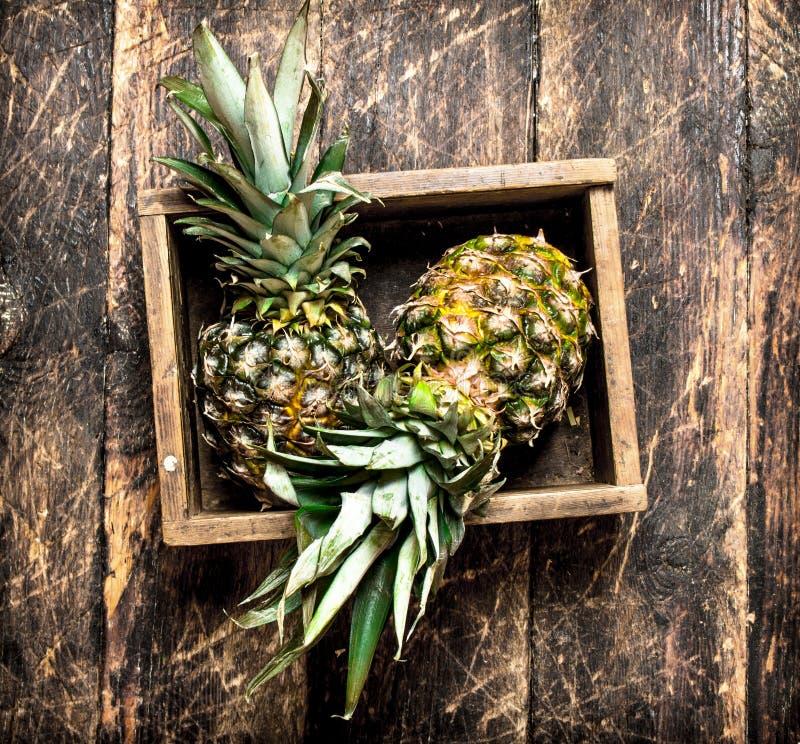 Ny ananas i en gammal ask fotografering för bildbyråer