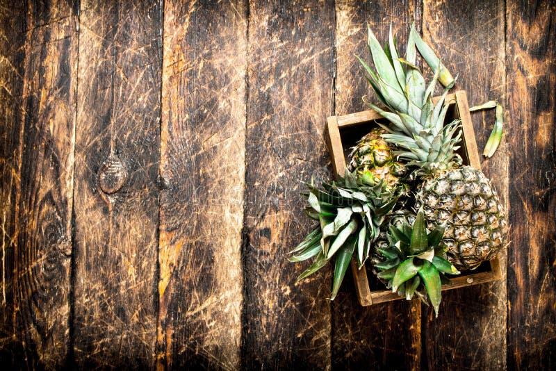 Ny ananas i en gammal ask arkivbilder