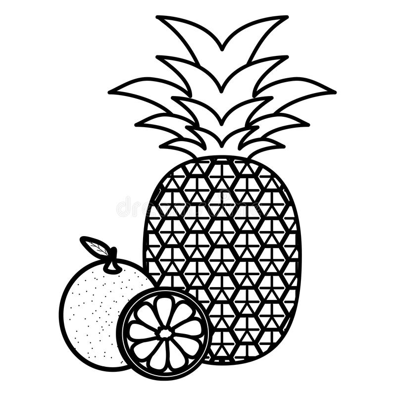 Ny ananas med apelsiner stock illustrationer