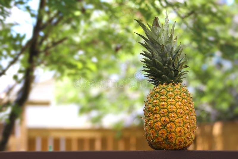 Ny ananas på en trätabell utanför under dagen royaltyfri foto