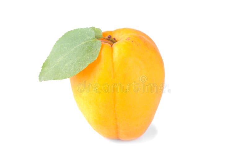 ny aprikos med ett blad på en isolerad vit bakgrund arkivfoton
