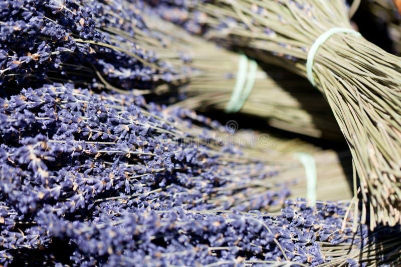 Ny aromatisk lavendel i den utomhus- korgmakroen arkivfoto