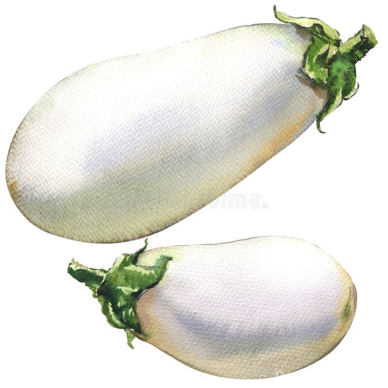 Ny aubergine, isolerade aubergine, vattenfärgillustration på vit stock illustrationer