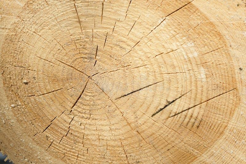 Ny bakgrund eller textur för snitt för trädstubbe royaltyfri fotografi