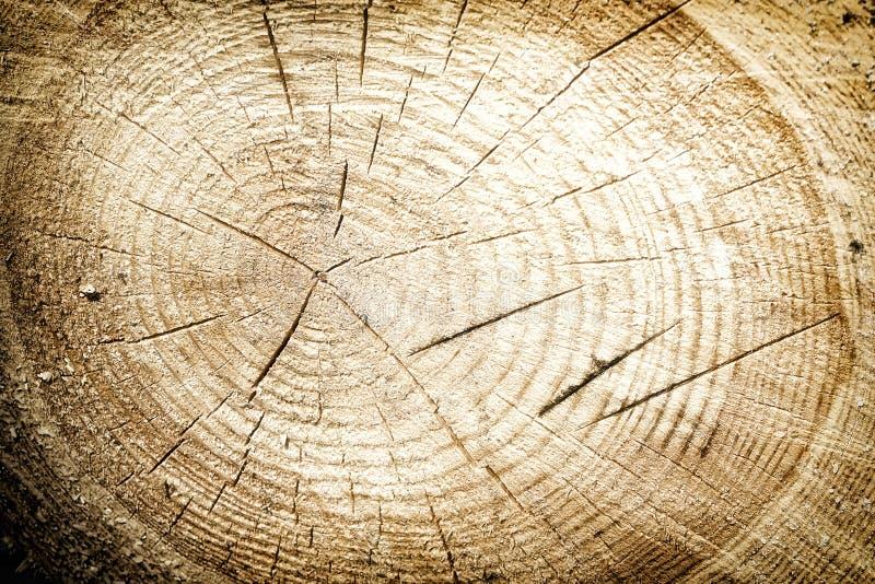 Ny bakgrund eller textur för snitt för trädstubbe fotografering för bildbyråer