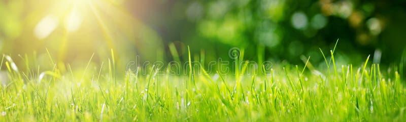Ny bakgrund för grönt gräs i solig sommardag royaltyfri foto