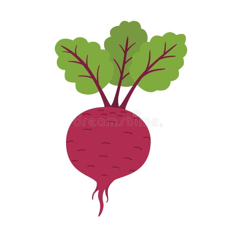 Ny beta med bladet Naturligt rota Grönsakingrediens för mat vektor illustrationer