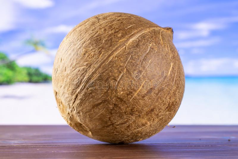 Ny bio kokosnöt på stranden royaltyfri bild