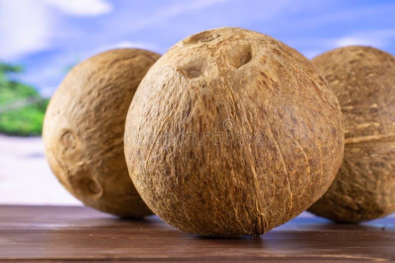 Ny bio kokosnöt på stranden arkivfoto