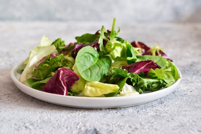 Ny blandning av sallader: gr?nsallat arugula, spenat, mesclun, mache p? en m?rk bakgrund arkivbild