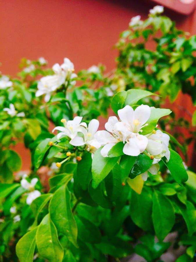 ny blomma arkivbild
