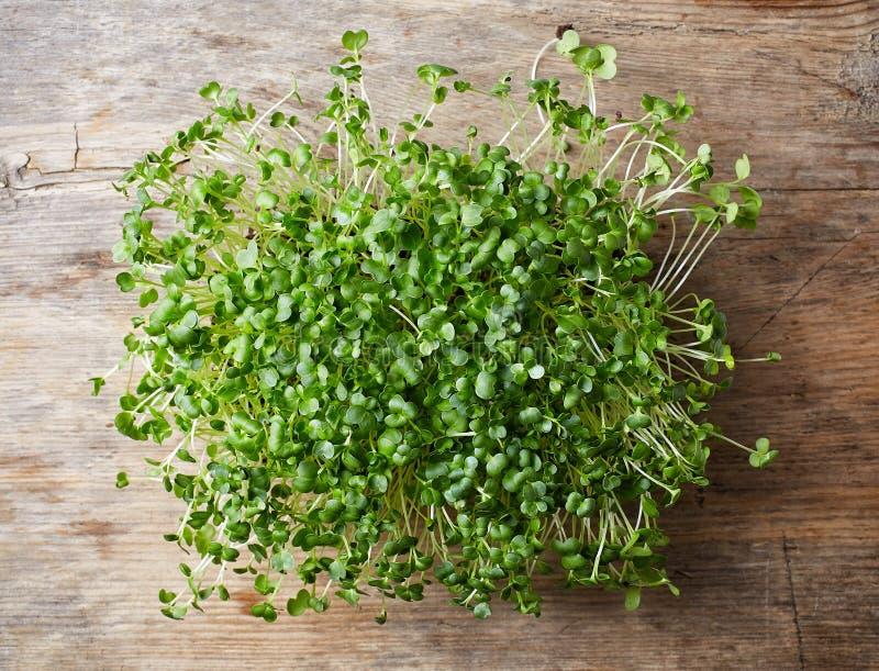 Ny broccoligrodd arkivfoto