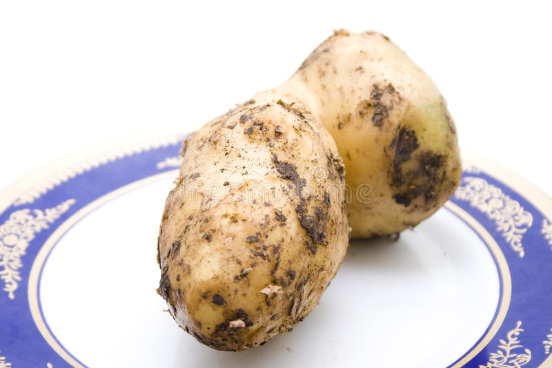 Ny brun stor potatis royaltyfri foto