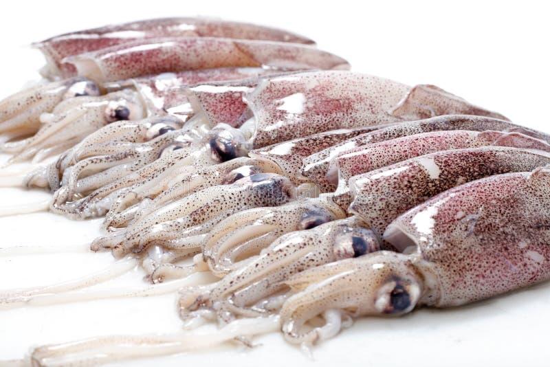 ny calamari arkivbilder
