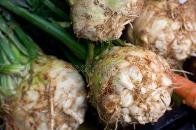 ny celeriac arkivfoton