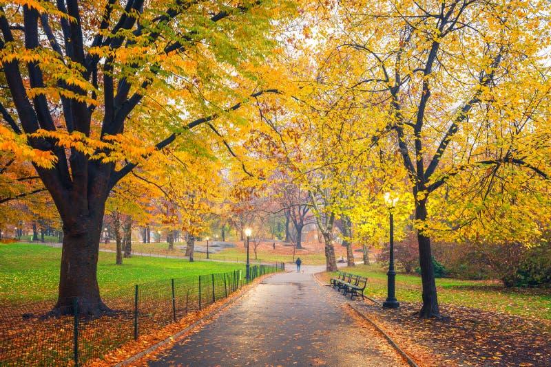 NY centrali park przy mgłowym rankiem obrazy royalty free