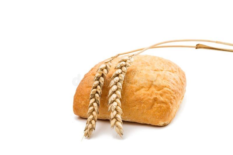 Ny ciabatta för italienskt bröd med öron av vete arkivbild