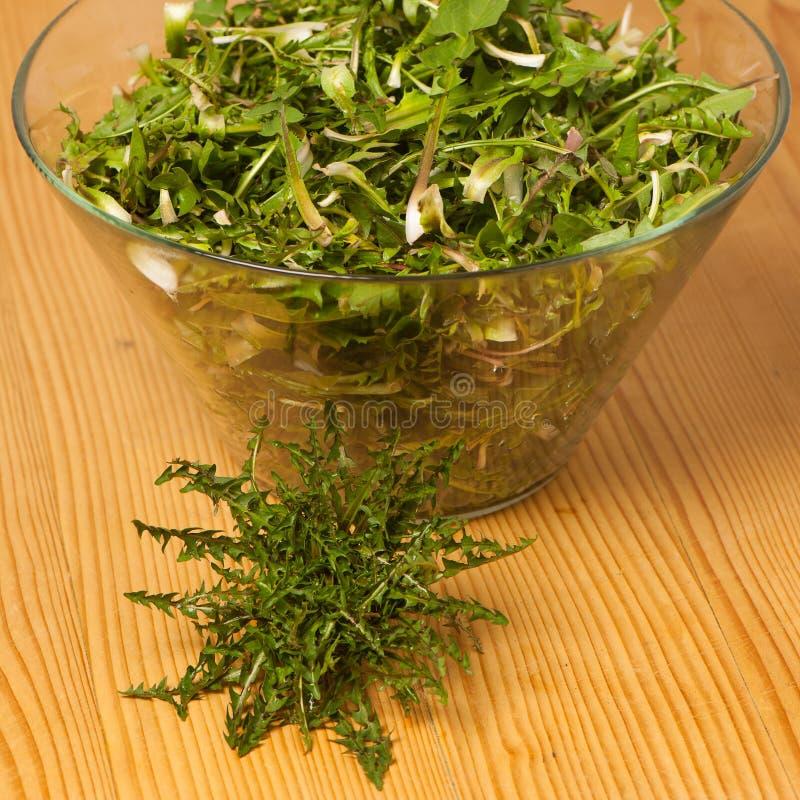 Ny closeup för sallad för vårgräsplanmaskros arkivbilder