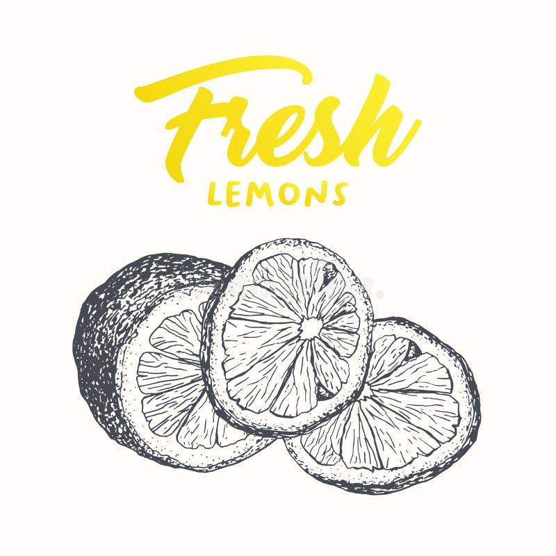 Ny design för citronvektorbaner vektor illustrationer