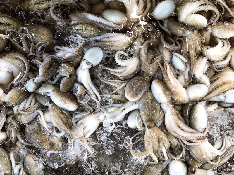 Ny Dollfus bläckfisk på marknaden för försäljning royaltyfria foton