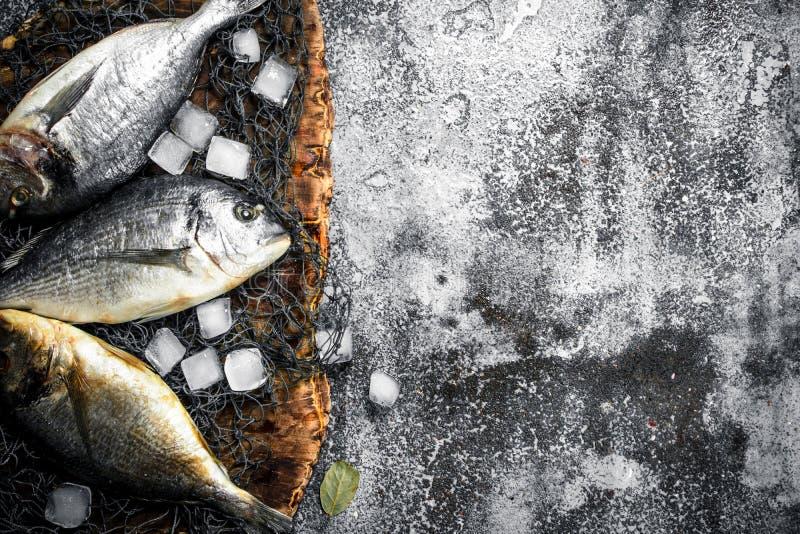 Ny Dorado fisk med iskuber arkivfoton