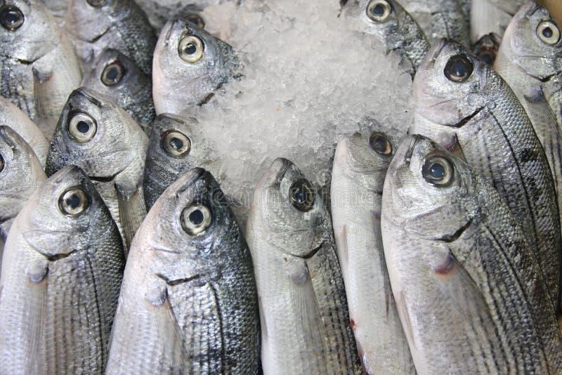ny is för fisk arkivfoto