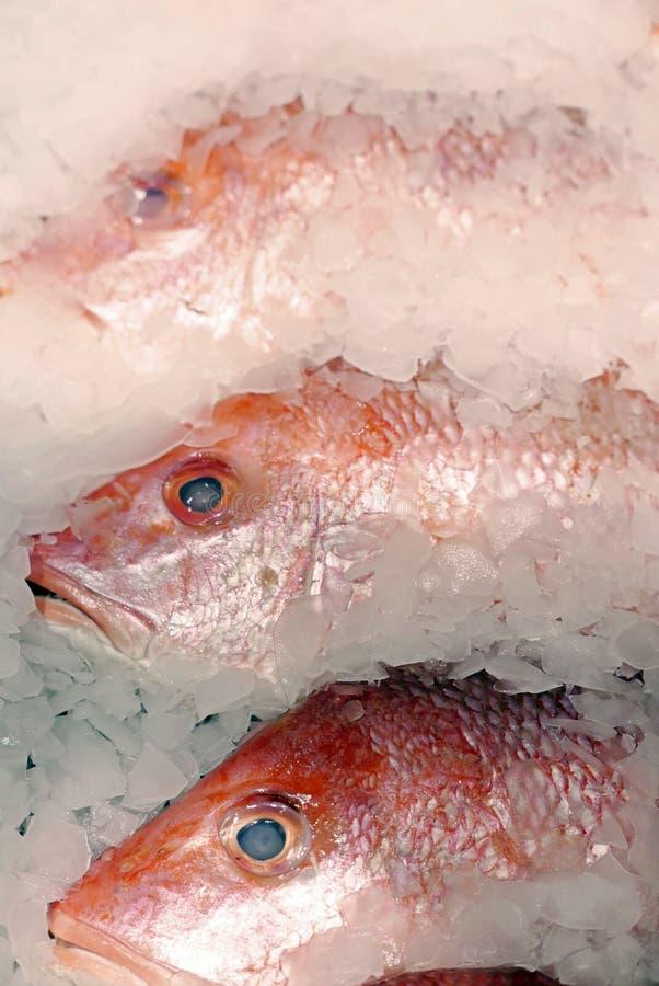 ny is för fisk royaltyfri bild