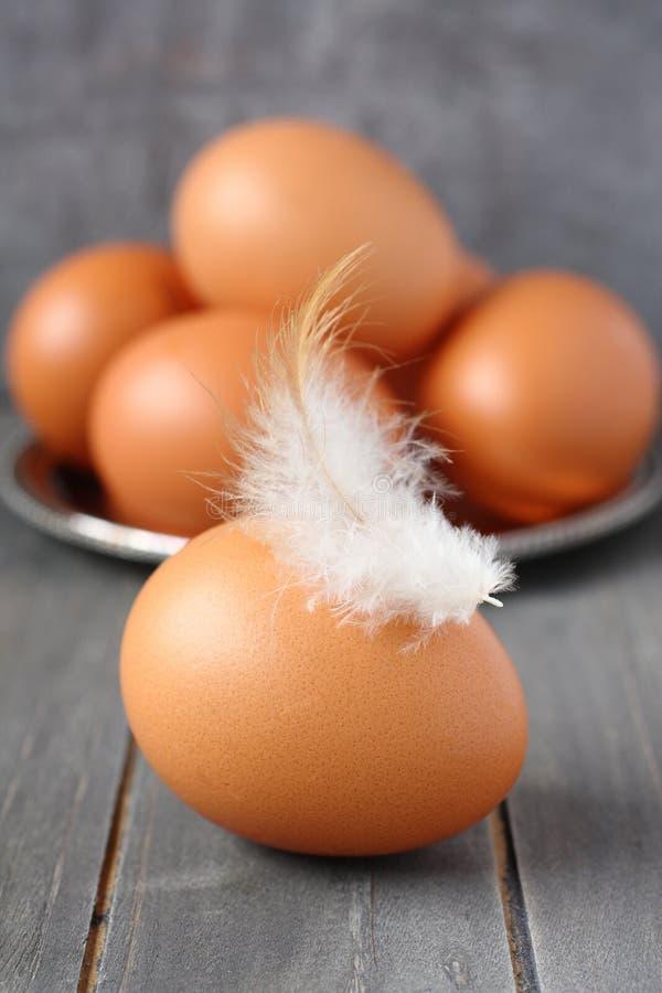 Ny feg ägg och fjäder på lantlig träbakgrund royaltyfria bilder