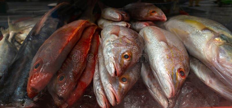 Ny fisk av olika färger som visas i en till salu marknad royaltyfri fotografi