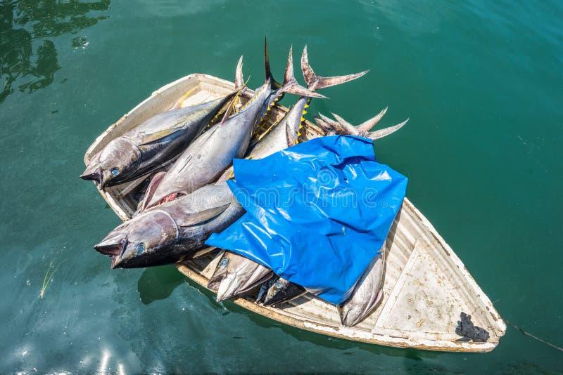 Ny fisk för tonfisk i ett litet fartyg royaltyfria bilder