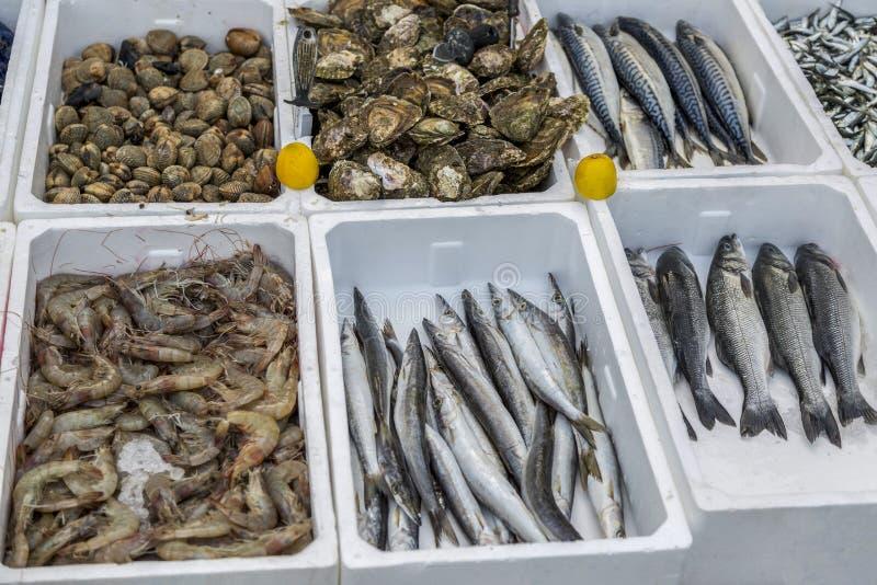 Ny fisk och skaldjur på marknaden av Budva i Montenegro royaltyfria foton