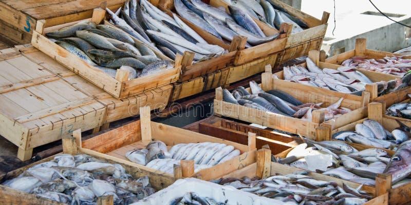 Ny fisk på försäljning på marknaden av hamnen av Bodrum Turkiet arkivfoto