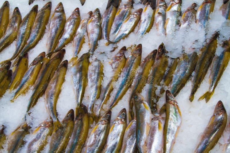 Ny fisk på is i fiskmarknad arkivbilder