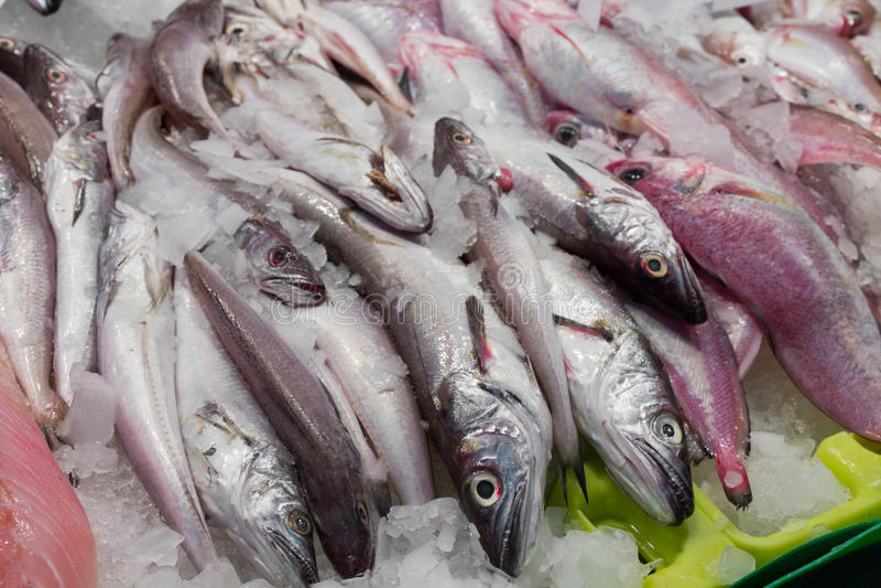 Ny fisk på marknadsföra royaltyfri foto