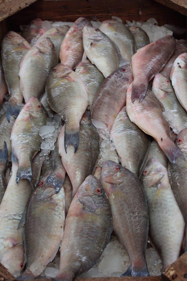 Ny fisk på marknadsföra fotografering för bildbyråer