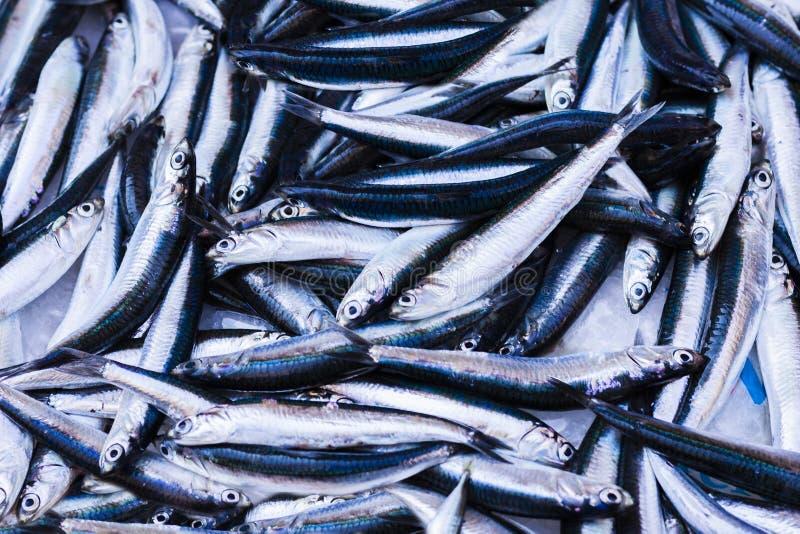 Ny fisk som är till salu i fiskmarknaden av Catania, Sicilien, Italien arkivbild