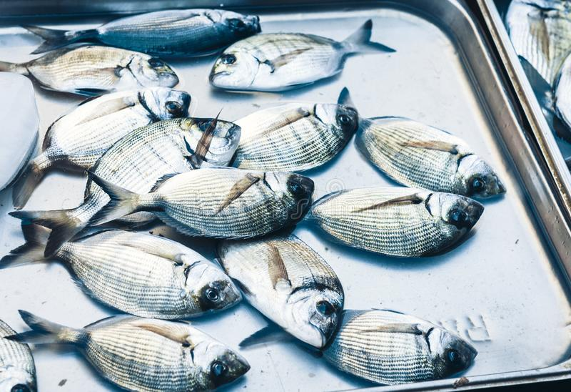 Ny fisk som är till salu i fiskmarknaden Pescheria av Catania, Sicilien, Italien royaltyfria foton