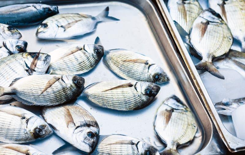 Ny fisk som ?r till salu i fiskmarknaden Pescheria av Catania, Sicilien, Italien royaltyfri fotografi