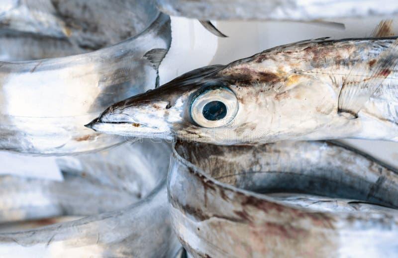 Ny fisk som ?r till salu i fiskmarknaden Pescheria av Catania, Sicilien, Italien royaltyfri foto