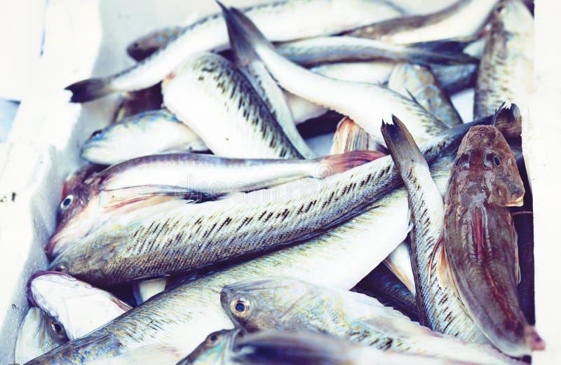 Ny fisk som ?r till salu i fiskmarknaden Pescheria av Catania, Sicilien, Italien arkivbild