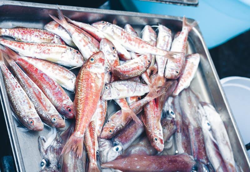 Ny fisk som  arkivbild