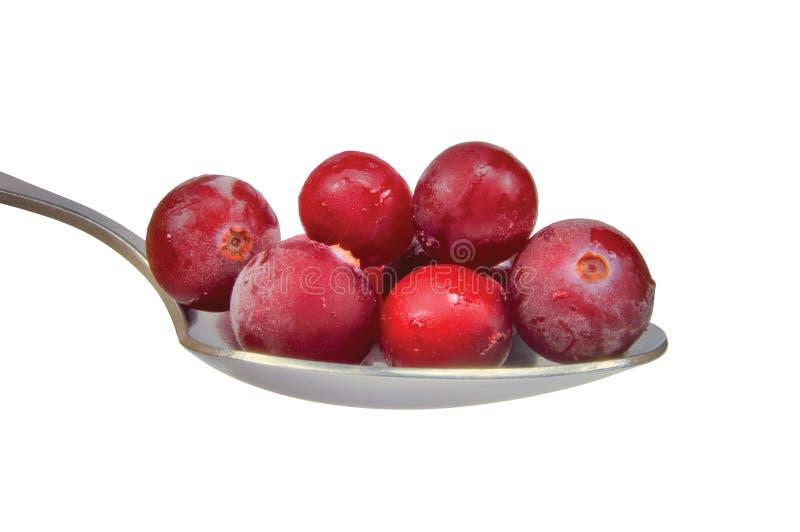 ny fryst isolerad makrosked för cranberries royaltyfri fotografi
