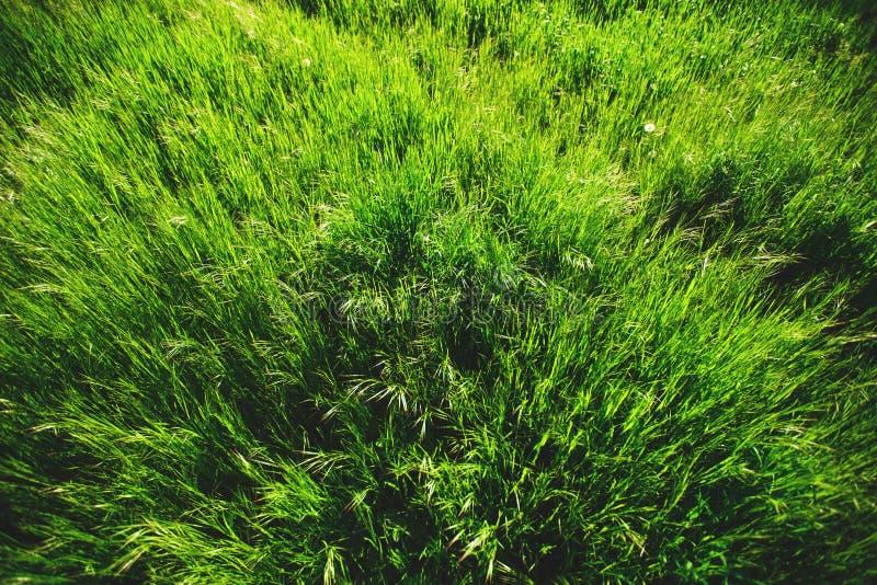 ny gräsgreen royaltyfria bilder
