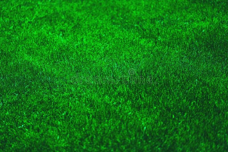 ny gräsgreen fotografering för bildbyråer