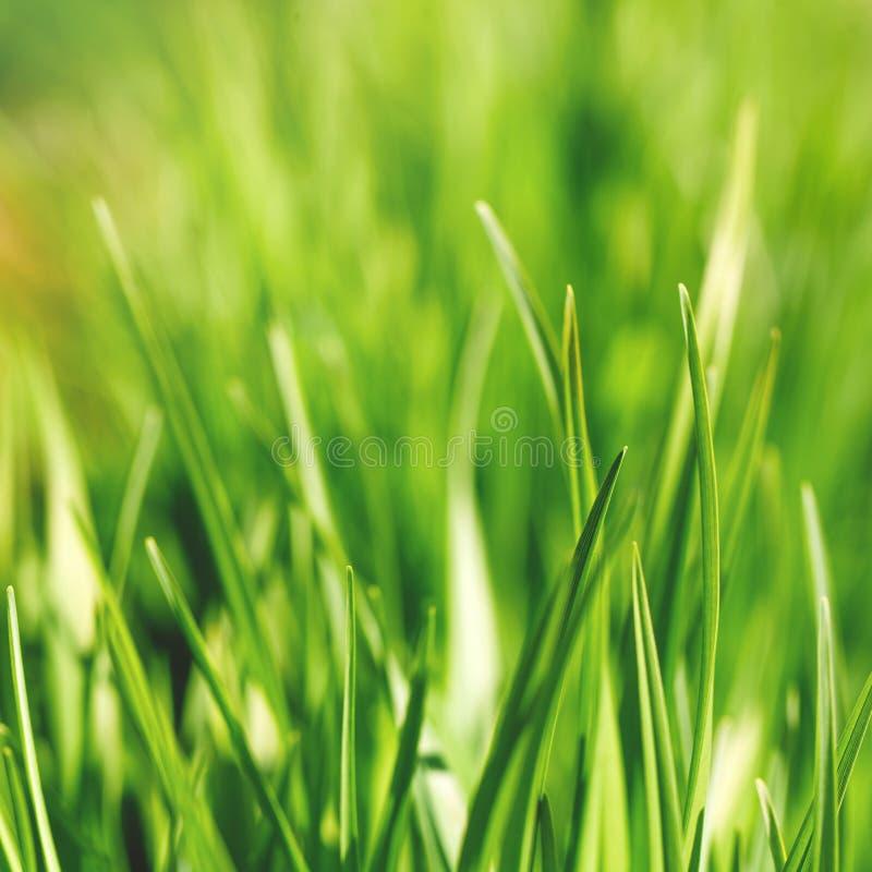 ny gräsgreen royaltyfri bild
