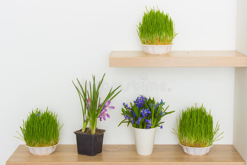 ny gräsgreen arkivfoto