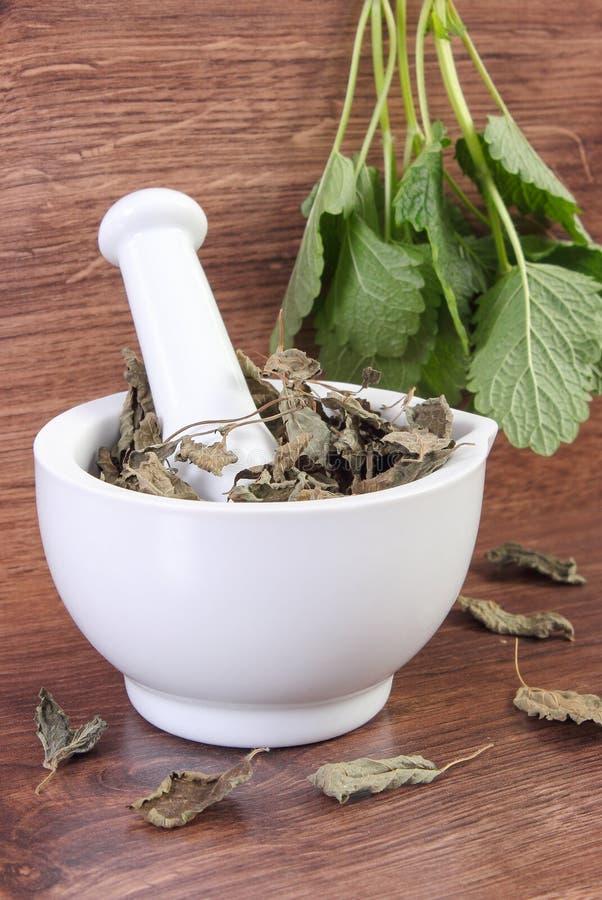 Ny gräsplan och torkad citronbalsam i mortel, herbalism, alternativ medicin royaltyfri foto