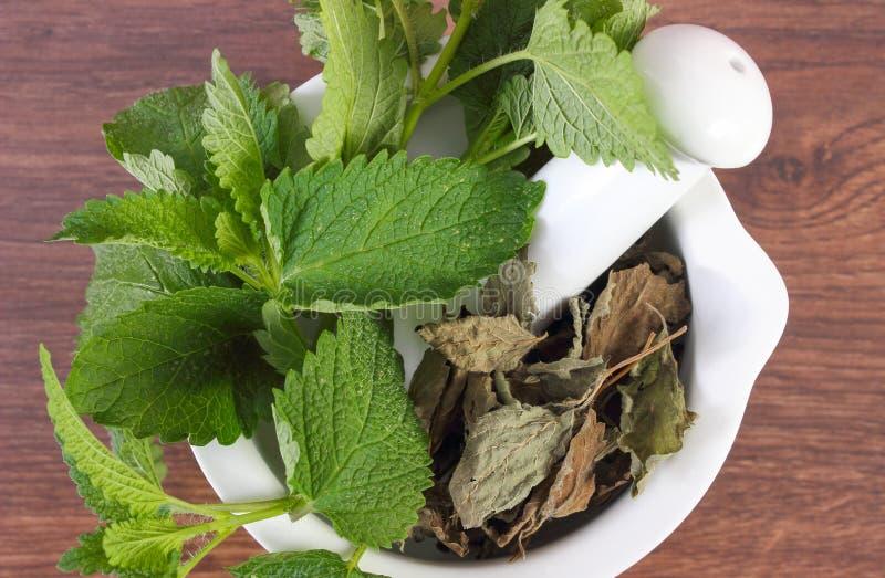 Ny gräsplan och torkad citronbalsam i mortel, herbalism, alternativ medicin fotografering för bildbyråer