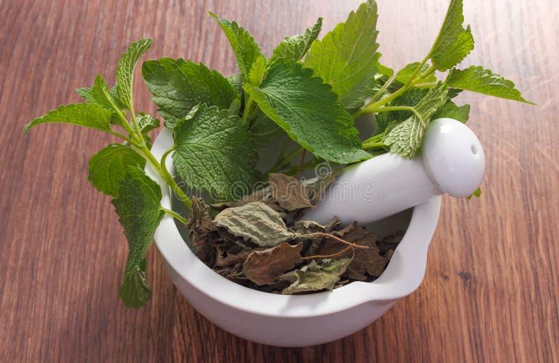 Ny gräsplan och torkad citronbalsam i mortel, herbalism, alternativ medicin arkivfoton